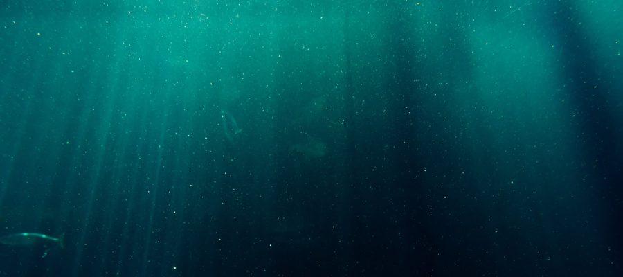 """Projeto ValorMar – Webinar """"Digitalização da Cadeia de Valor do Pescado"""""""