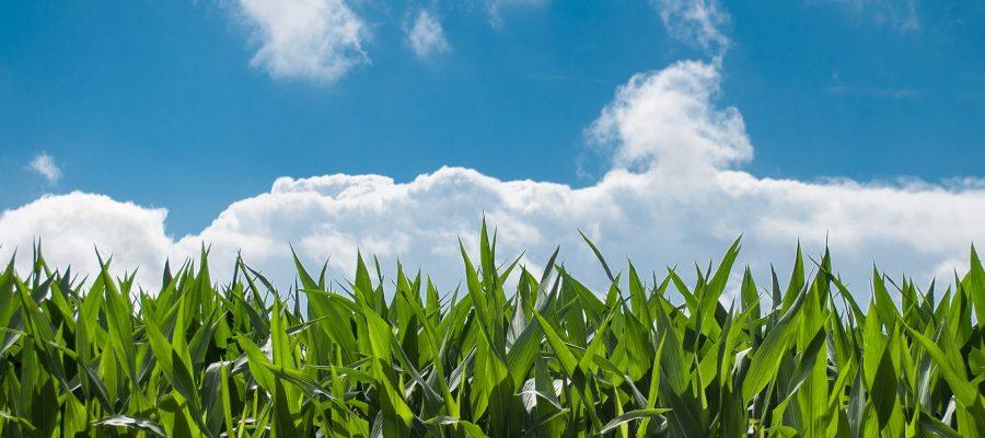 O Futuro da Tecnologia Agrícola