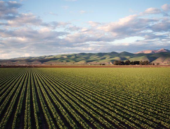 Economia Digital no Setor Agroalimentar: Como começar?